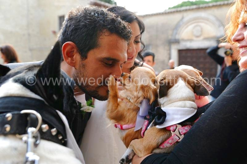 Intervista a Elisa Guidarelli Wedding Dog Sitter
