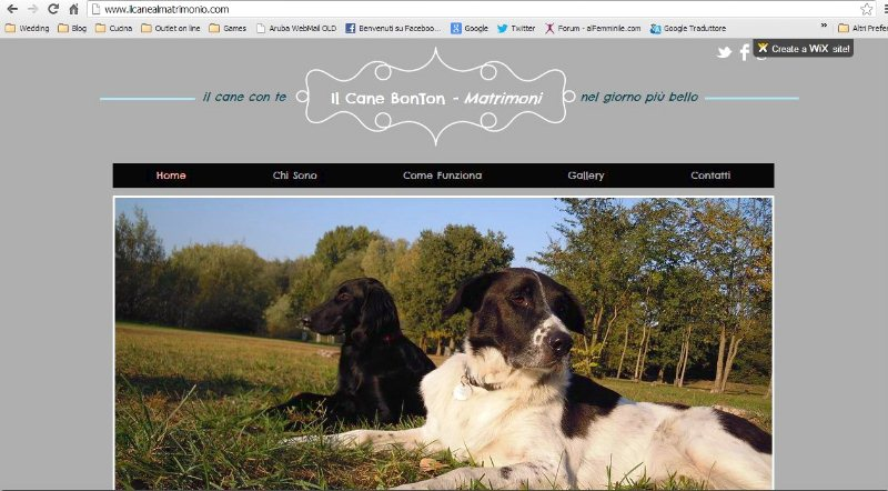 IL CANE BON TONwedding dog sitter