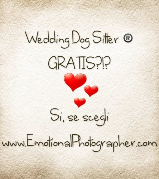 Wedding Dog Sitter gratis